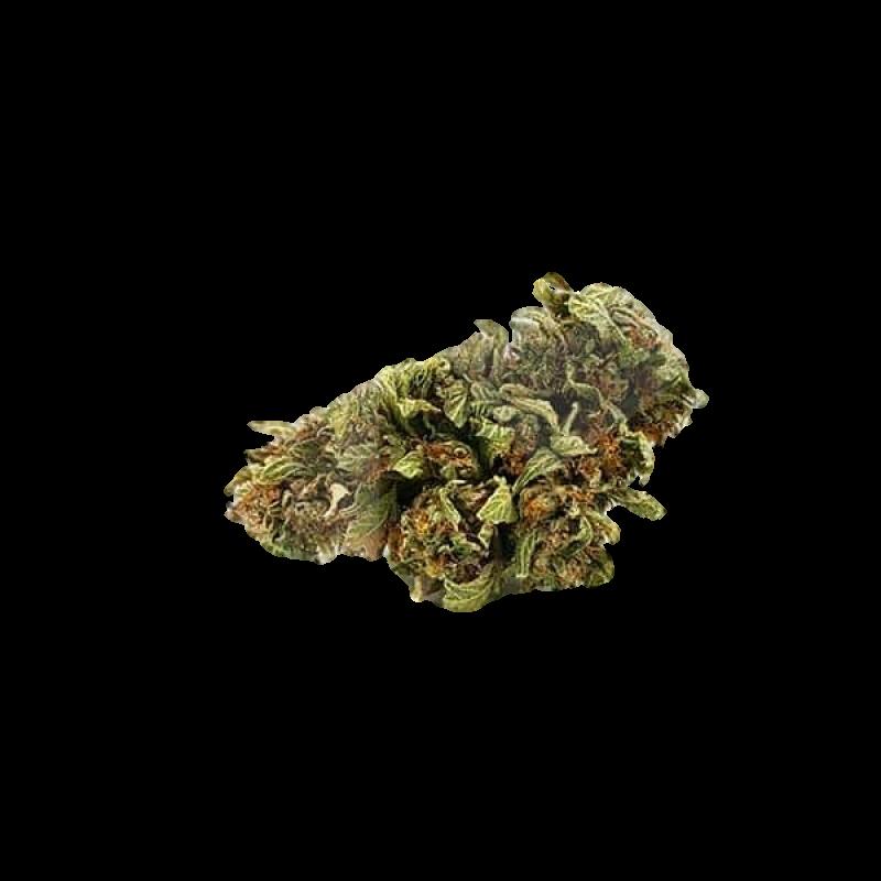 Harlequin CBD Flowers (12% CBD) 1g
